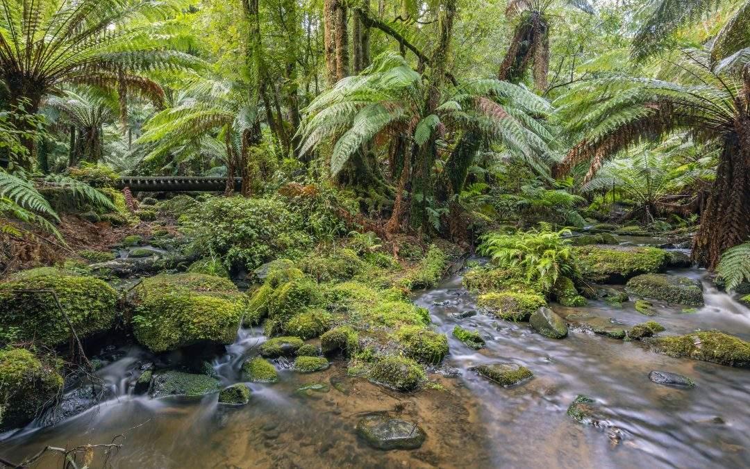 Australian Bushscape